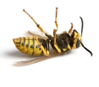 Pest-control (2)